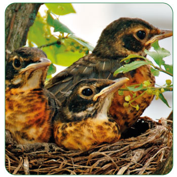 how to keep birds from nesting